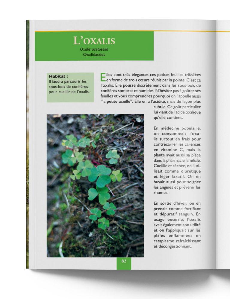 Oxalis Acetosella Oxalidacées - Plante Médicinale de Montagne – Gilles Hiobergary