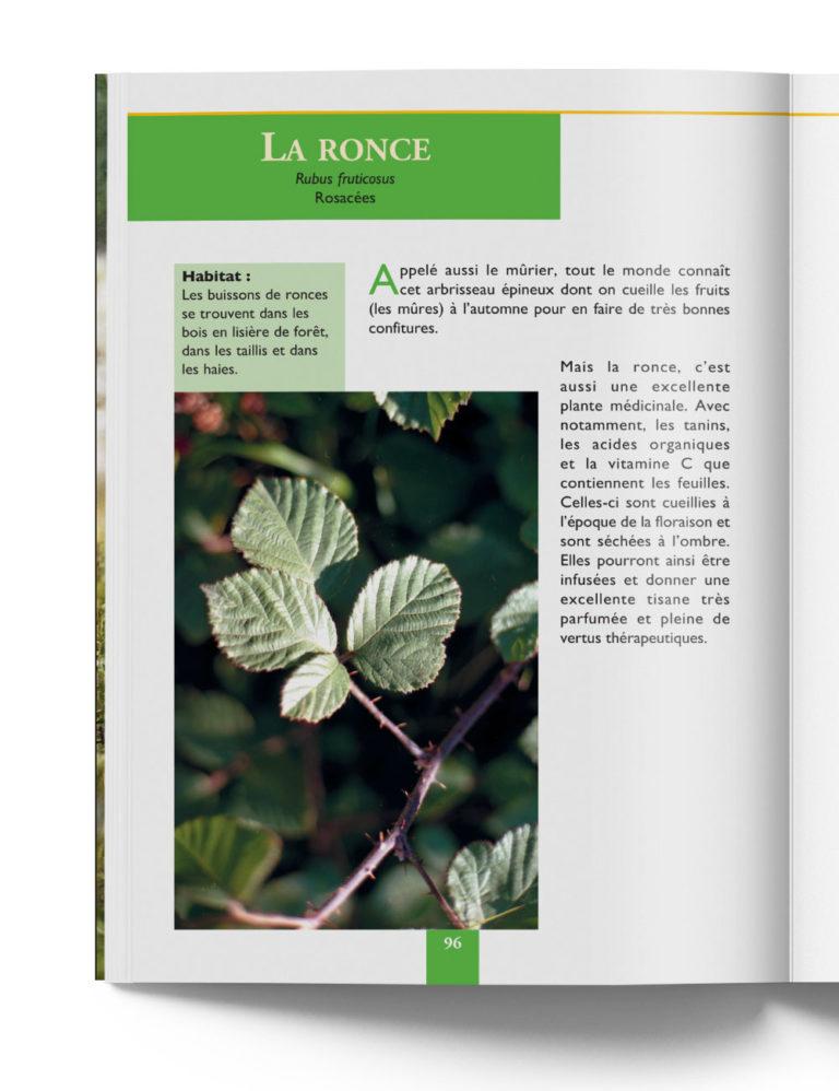 Ronce Rubus Fruticosus - Plante Médicinale de Montagne – Gilles Hiobergary