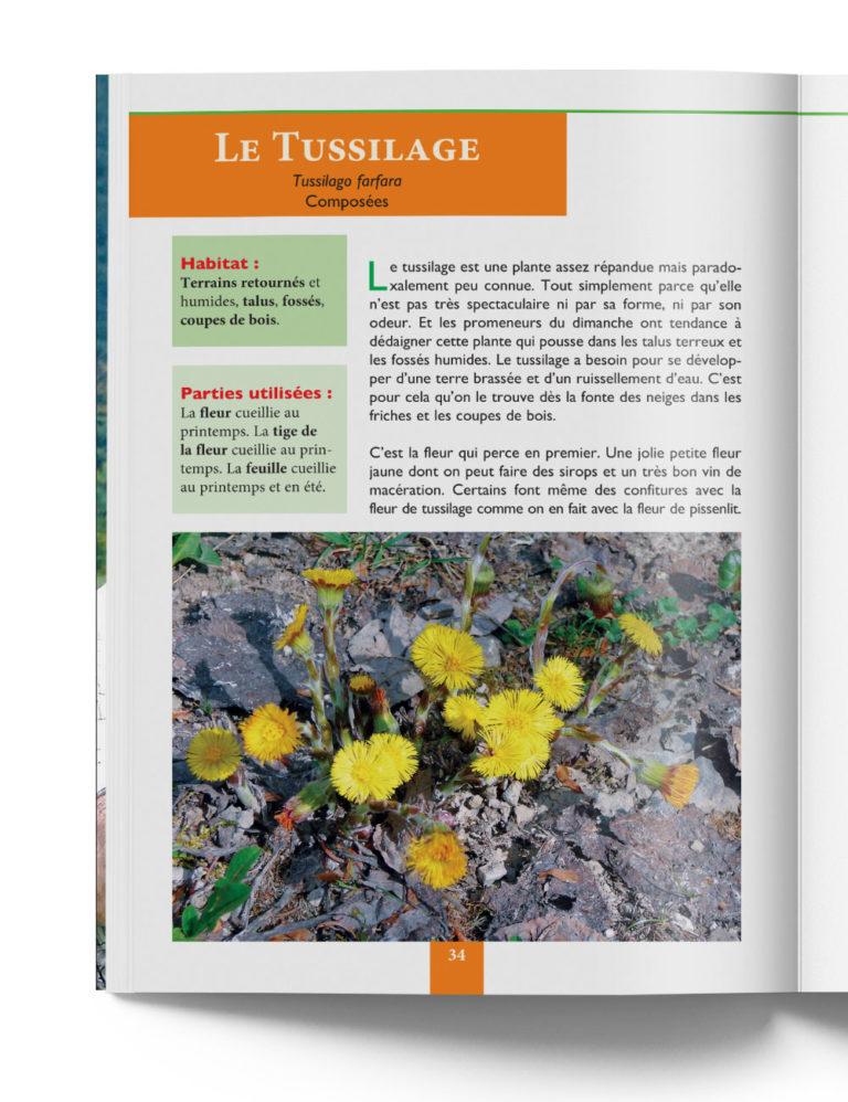 Tussilage - Plantes de Montagne et Fruits Sauvages – Gilles Hiobergary